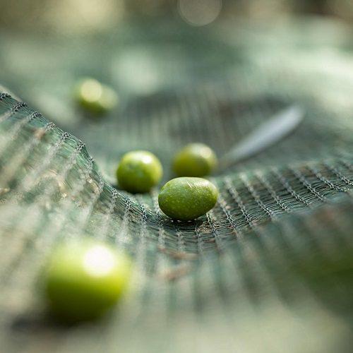 ulei de masline extravirgin fonte fi foiano